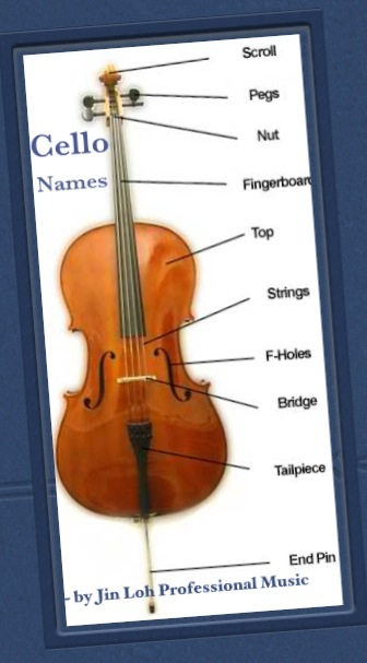Miss Jin Loh Has Summarized The Following Guide To Teach Cello Players Especially Beginners Step By On How Find Out Correct Size